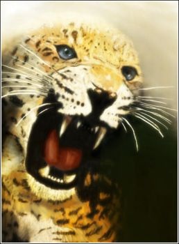 Leopard by Rcal