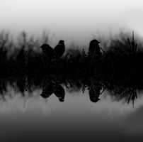 Silent reflection by Andaelentari