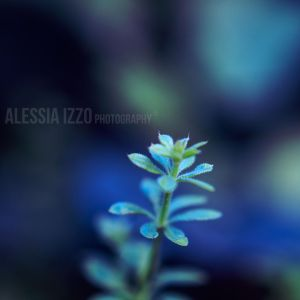 Cold Morning by Alessia-Izzo
