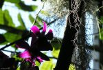 Orchid light by andreareno