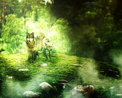 Wolves Photomanip(experiment) by NETRUMgFx