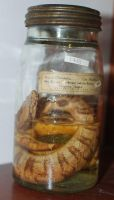 snake in a jar by Magweno