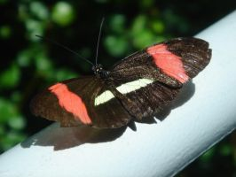 Butterfly on Railing by topace12