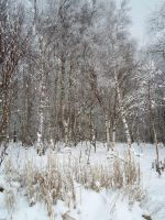 Winter forest 615 by MASYON