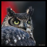 Owl1 by Globaludodesign