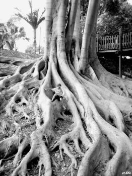 roots by jokneeappleseed