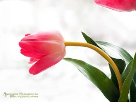 Tulip - Polymer Clay Flowers by Vakhara