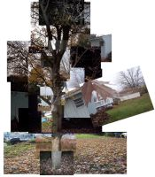 Tree Photo Collage by DarkAngelKalas