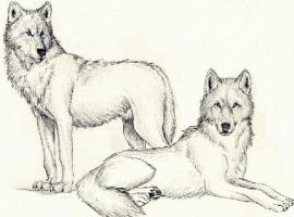 Wolves by Silver-Sapphire-Star