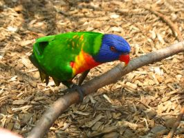 Feed the birds tuppence Nashville Zoo 4 by TheNormal1