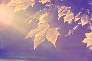 No More Fall by KenielOdoms
