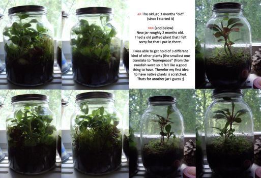 Plants in a jar - update by decors