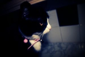 molly.. by GreenMouthwash