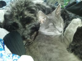 And they called it Kitten Love by GDeNofa