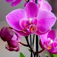 Orchid1 by AndraMarin