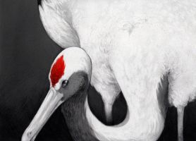 Red-crowned Crane by Artisticaviary