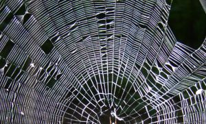 78 - web by WCat-stock