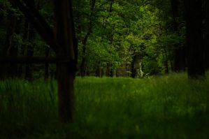 into the green forest by Lk-Photography