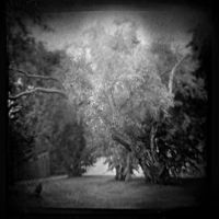 Crow Grove by intao