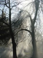 smoky tree by IskraM