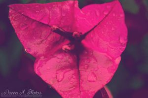 Day 41. Colors of the rain by smilejustbcuz