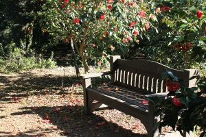 Petals on Bench by meeks105