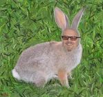 Jack Rabbit Nicholson by isha-1