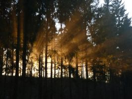 setting the woods on fire by Setril