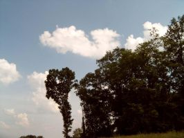 sky and trees by kbstock