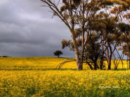 Windy Day in WA by FireflyPhotosAust
