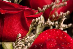 Part of a Bouquet by DavidMCoyle