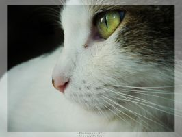 His Longing Eyes by Annortha