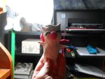 play-doh mog by chaos-galian