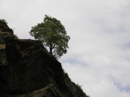 tree on a Rock by archaeopteryx-stocks