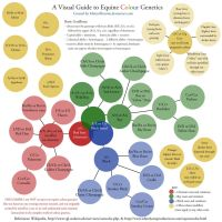 Visual Equine Colour Genetic Chart by MistyofSunrise