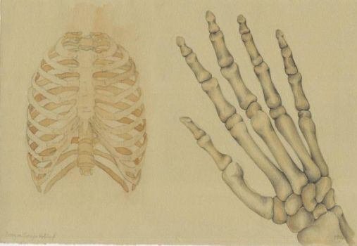 Hand and Rib Cage by Catipher