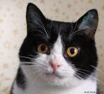 Little Zorro sniffs at me by hoschie