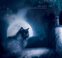 The cat by mariaig