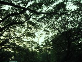 and more trees by peregrination