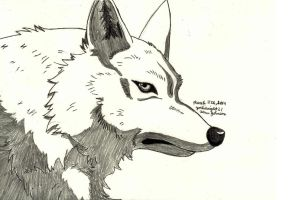 Kiba (Wolf's Rain) by Yoshiknight2