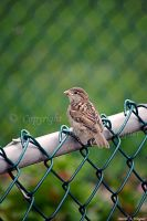 On the Fence by David-A-Wagner