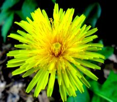 Yellow Wildflower by Meeb98