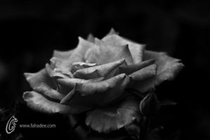 No Color by fahadee