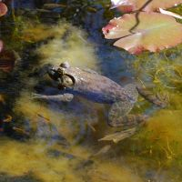 Toad Stock 2 by chamberstock