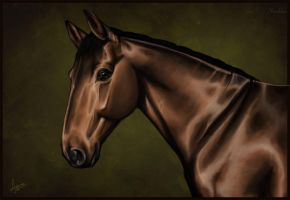 Equine portrait III (Commission) by a-Astree