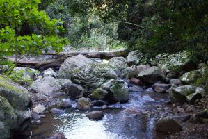 STOCK - Springbrook 2012 020 by fillyrox