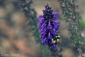 Bumble. by EugeniaCharmaine