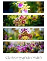 The beauty of the orchids by calimer00