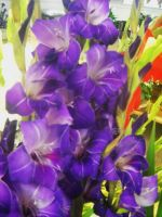 Glads 001 by tastybedsore