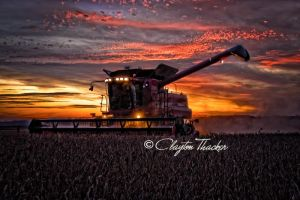 Harvest Sunset 13 by cthacker